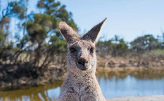 留学 あるある オーストラリア