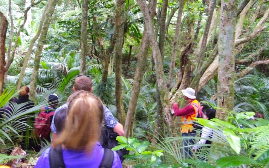 ニュージーランドのBush walk(雑木林探検)