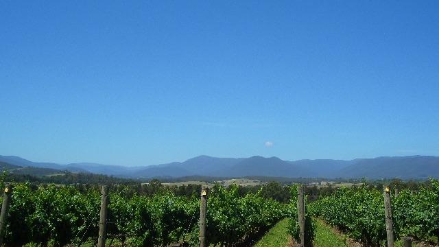 オーストラリアのブドウ畑