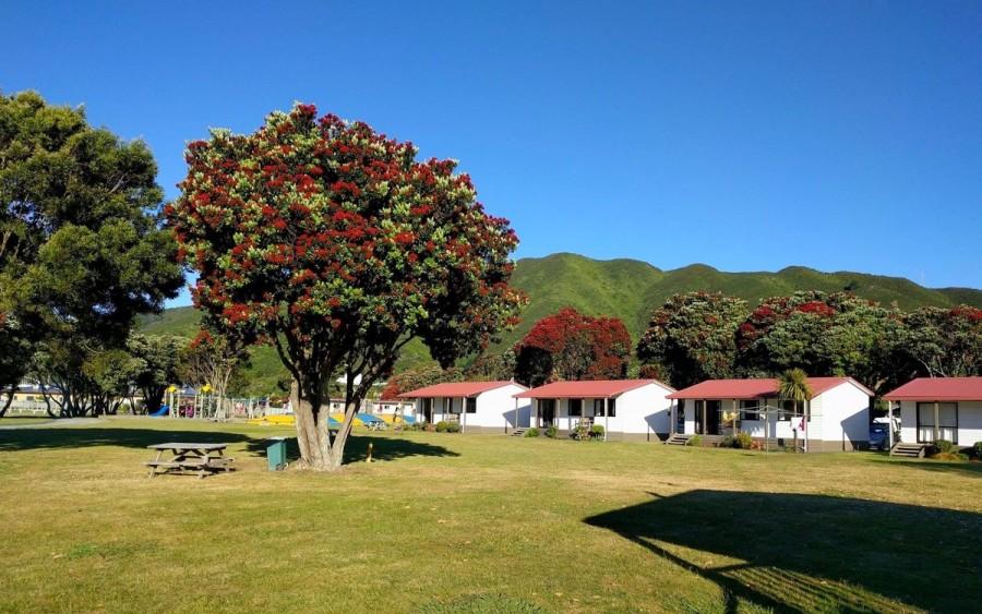 ニュージーランドのクリスマスツリー「Pohutukawa Tree(ポフトゥカワ・ツリー)」