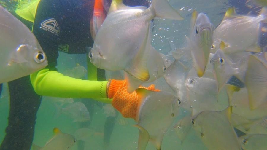 モートン島の魚