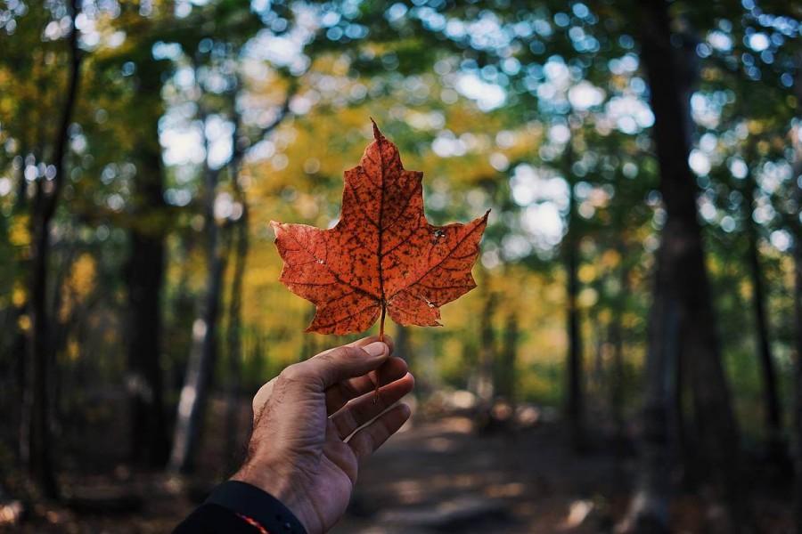 カナダでワーキングホリデーする場合の費用はいくら必要?費用を抑えるコツも紹介!