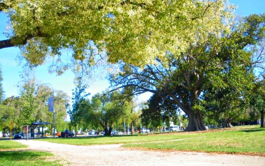 アデレード市内の公園