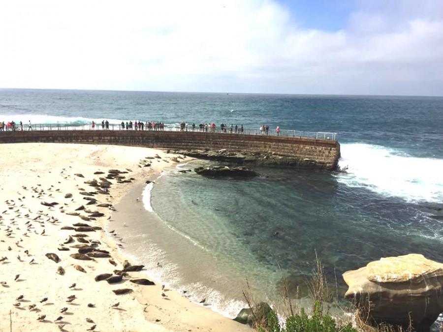 アザラシとビーチ