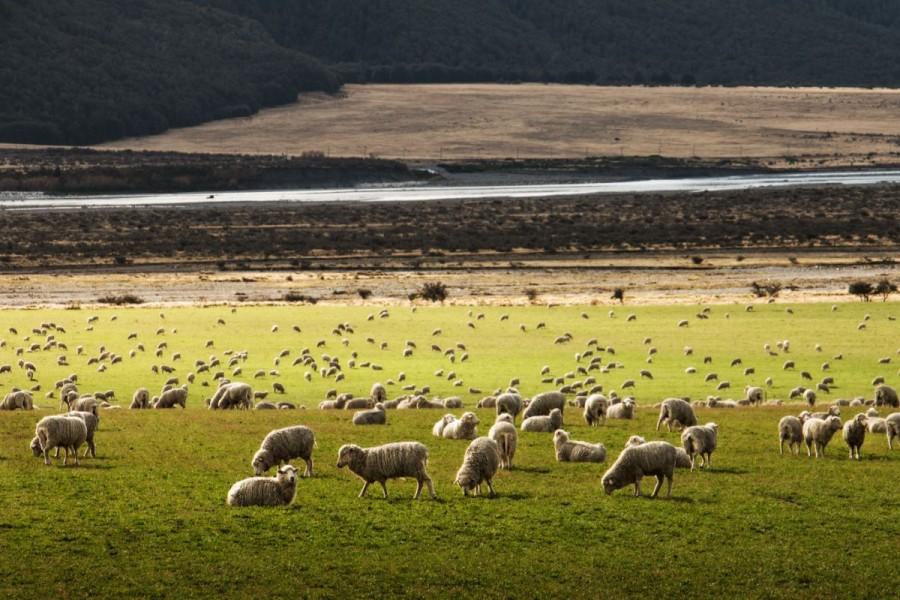 ニュージーランド 鉄道 当日の利用の流れ