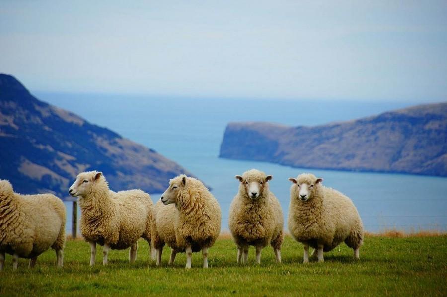 ニュージーランド留学 治安