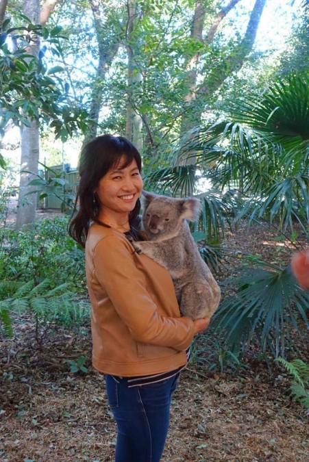 ブリスベンで出会える動物、コアラ
