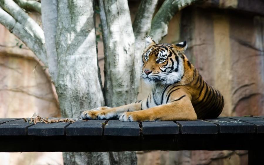 ウェリントン動物園